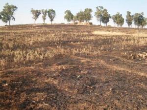 Se suceden pequeños incendios en Fuente Obejuna