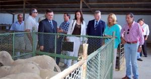 Las autoridades, ante uno de los expositores de ganado ovino de la feria. EVA M. HERAS