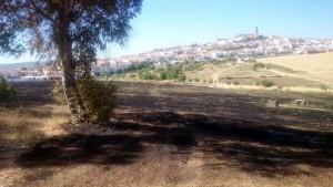 Un incendio arrasa cuatro hectáreas