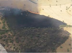 Efectivos del Infoca trabajan para sofocar un incendio forestal en Fuente Obejuna - Foto: PLAN INFOCA