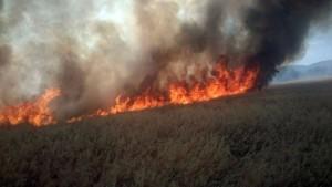 Un incendio arrasa unas 25 hectáreas de pasto en la Sierra de La Grana